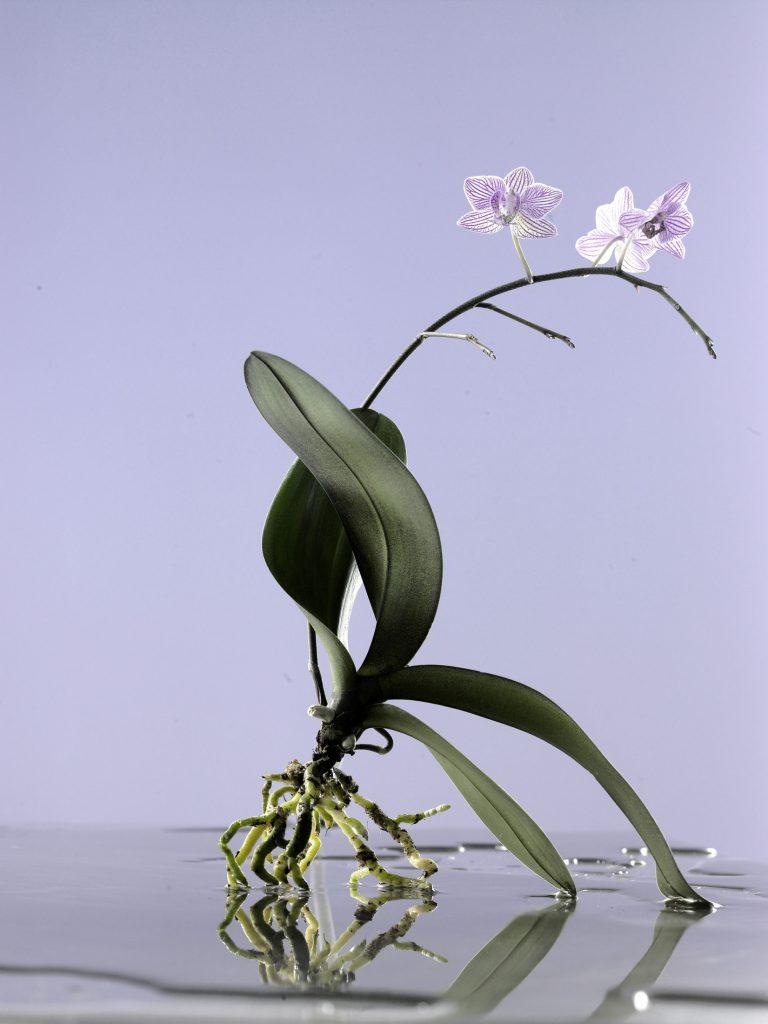 flower_individual_01_links