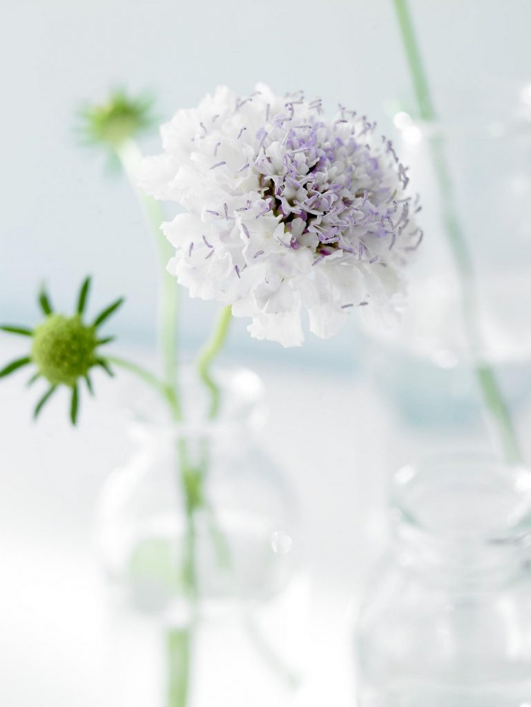 flower_individual_03_rechts