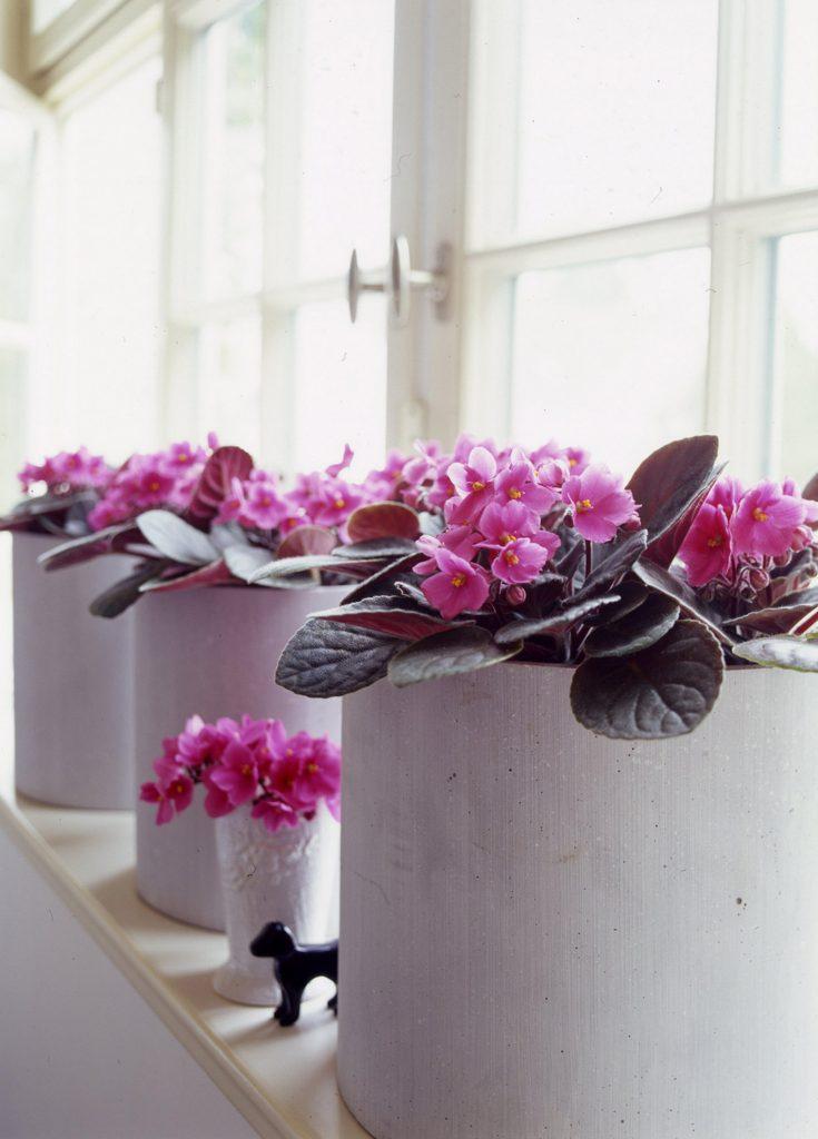 flower_individual_06_links