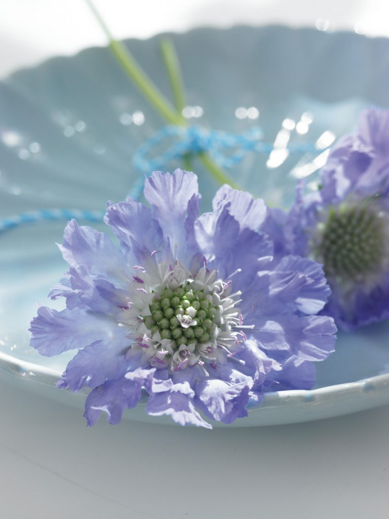 flower_individual_09_rechts
