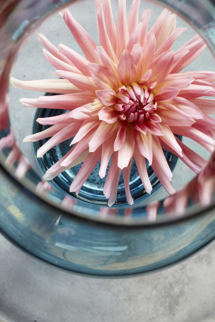 flower_individual_10_links
